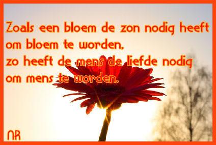 Zoals een bloem de zon nodig heeft om bloem te worden, zo heeft een mens de liefde nodig om mens te worden. Plaatjes