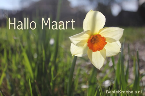 Hallo Maart