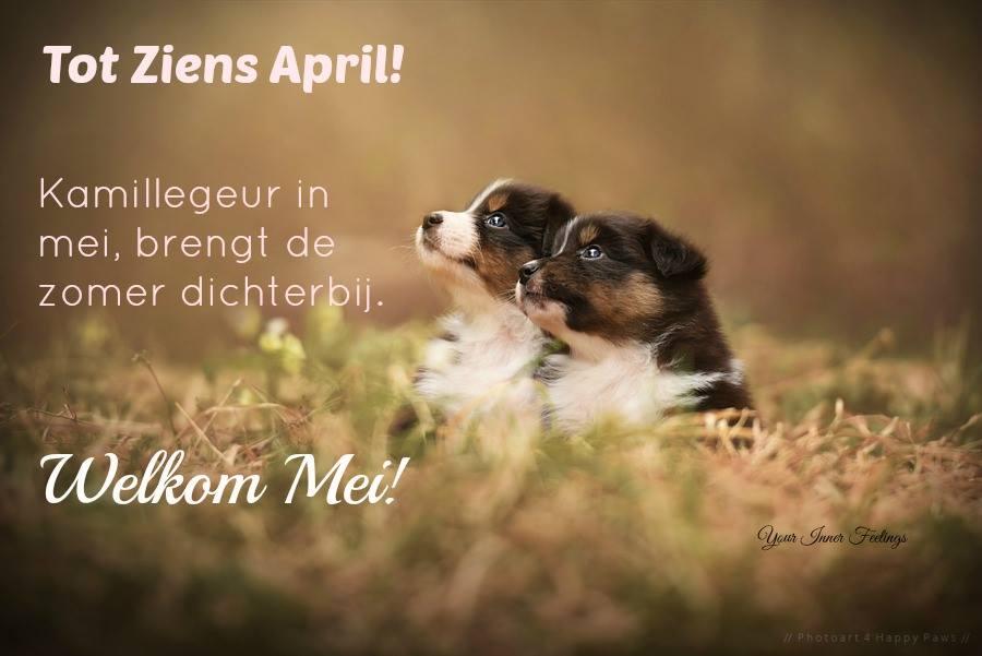 Tot ziens April! Kamillegeur in mei, brengt de zomer dichterbij. Welkom Mei!