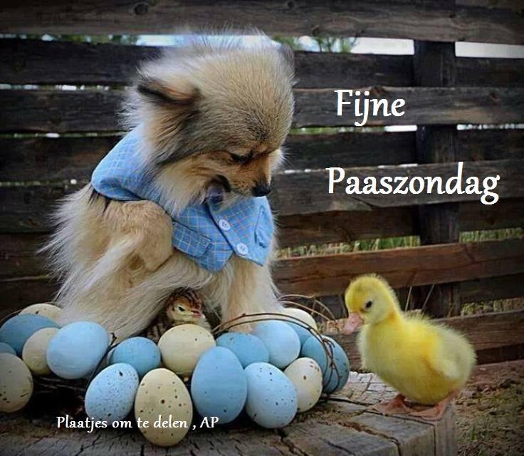 Fijne Paaszondag
